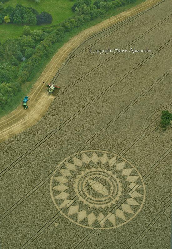 Nettle Hill, nr Ansty, Warwickshire   16th August 2014   Wheat L3