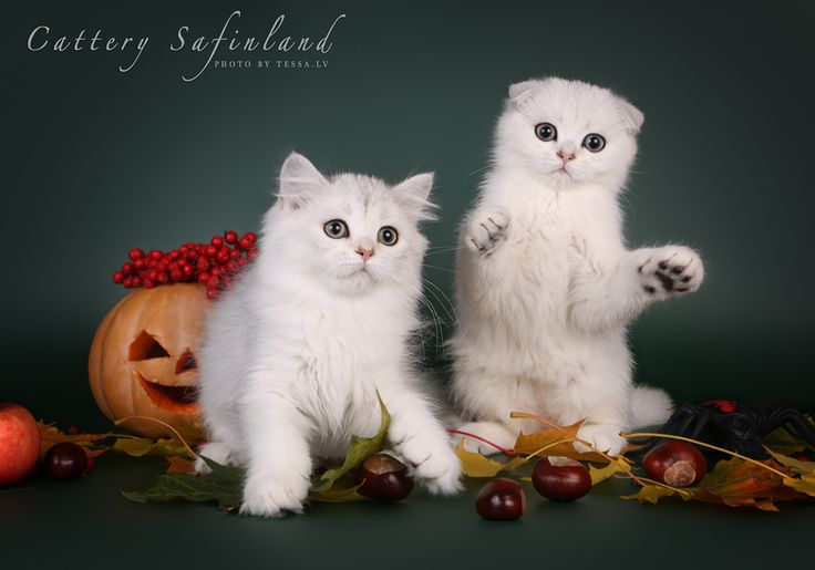 В этом году было аж целых две фотосессии с прицелом на Хэллоуин. Но…: tessochka
