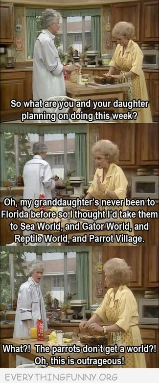 funny golden girls what the parrots dont get a world this is outrageous
