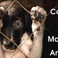 Rocío Martinez (Fundadora M.I.C.A.S.A.) (Fundadora M.I.C.A.S.A.): Crear el Reglamento de Protección Animal para la LEY DE PROTECCION ANIMAL ...