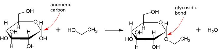 Glycosidic bond - Condensation reaction