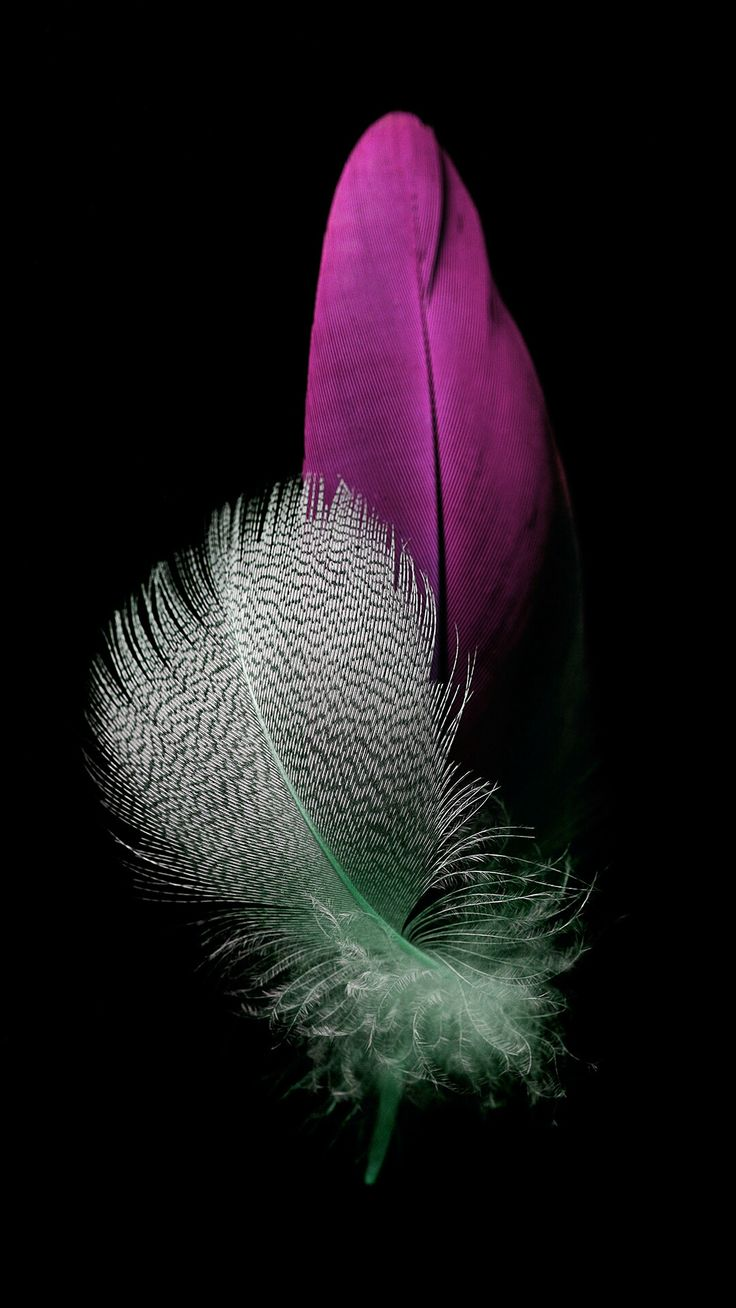 Huawei P8 Lite 3 Cool Feather wallpaper