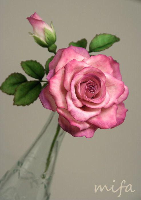 rosrosa de asucare