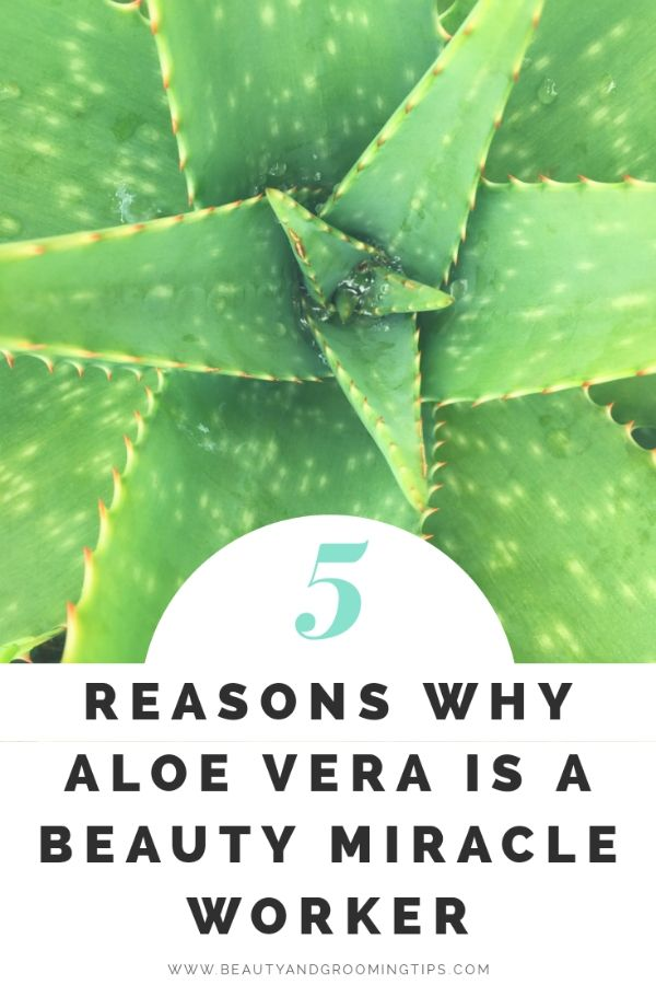 5 Reasons Why Aloe Vera Is A Beauty Miracle Worker Aloe Vera