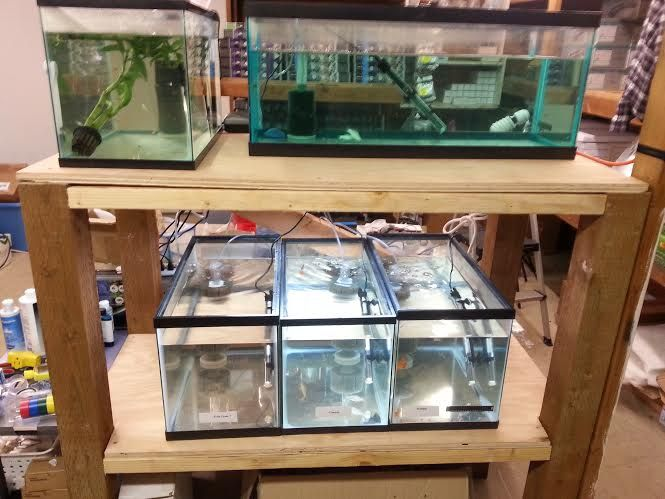 Very simple to build heavy duty aquarium stand full plans for Double fish tank