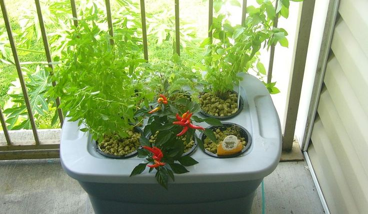 How and Why to Start Your Hydroponic Garden | The Prairie Homestead