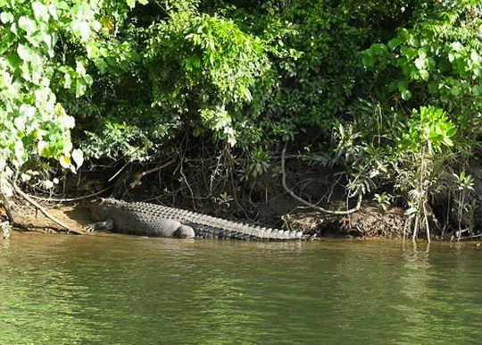 Take a Daintree River Cruise to spot some crocodiles.