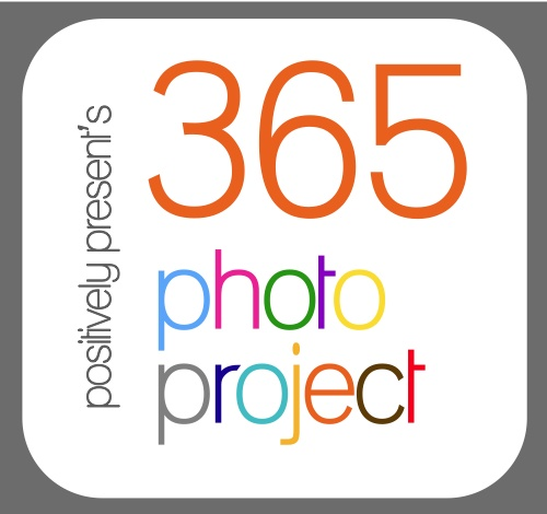 365 Photo Project! #photography