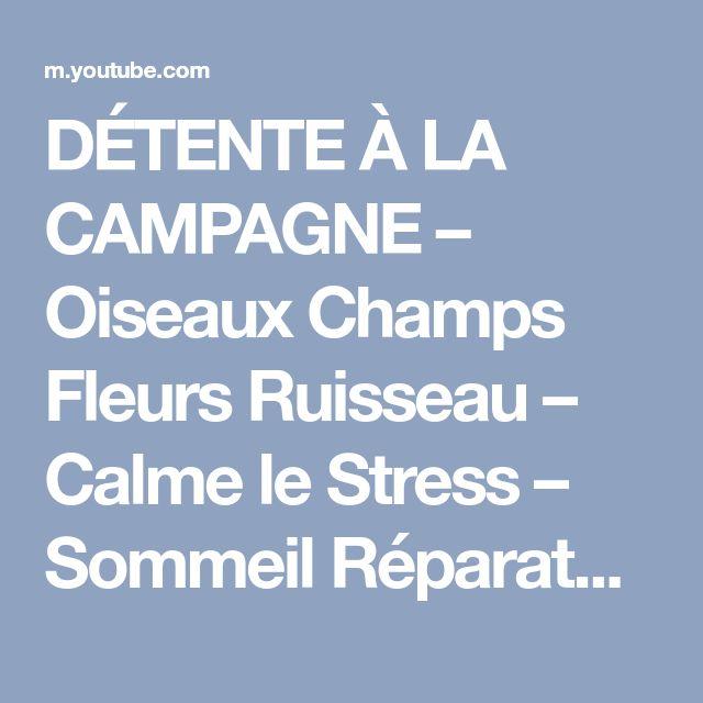 DÉTENTE À LA CAMPAGNE – Oiseaux Champs Fleurs Ruisseau – Calme le Stress – Sommeil Réparateur - YouTube