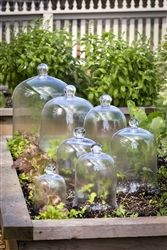 Glass Bell Jar Garden Cloche Cloches are timeless. Used in the past to protect frost intolerant seedlings, their uses have expanded to include protecting fragile treasures from dust or cookies from drying out. Use for everyday or the holidays. So versatile!  Glass