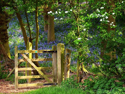 bluebell wood england | Coughton Court « Tudor stuff: Tudor history from the heart of England