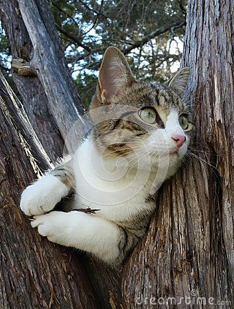 Watching for Birds