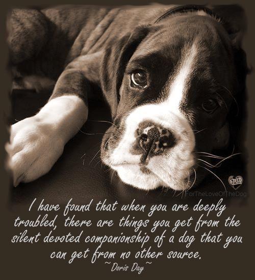 1/14/2014 9:11am  Dog Speaks  Doris Day blog.spartadog.com