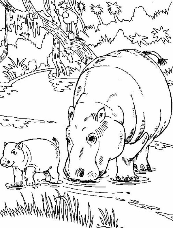 Hippo Eating With Her Baby Coloring Page Baby Coloring Pages