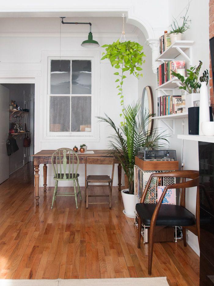153 best Buy Indoor Plants Indoor Palms and Indoor Trees images on ...