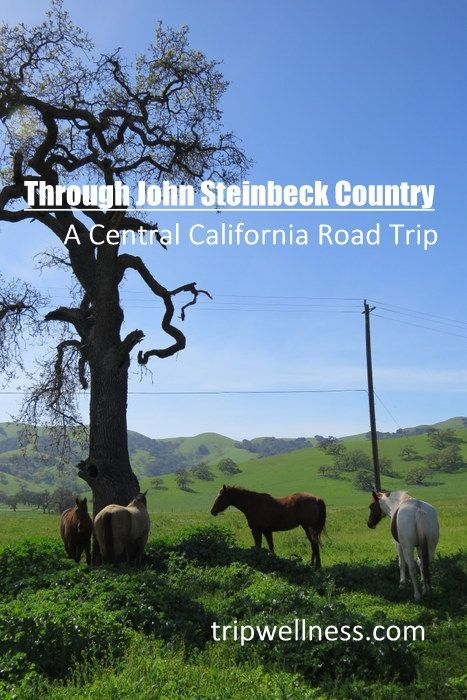 Come on a drive through #JohnSteinbeck Country. A California road trip on the Trip Wellness blog