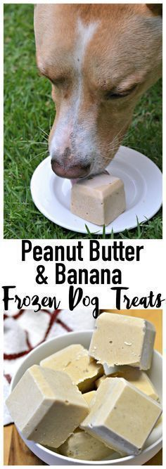 Frosty treats for your furry friend! Made with peanut butter + banana + and yogurt, these homemade frozen dog treats are perfect for summer!  My dogs actually like these better without the banana!  Peanut Butter Frozen Yogurt!