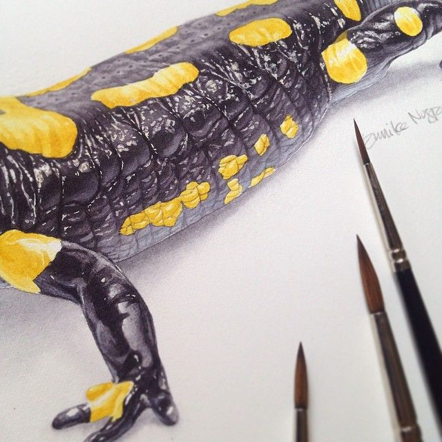 Close up details of #salamander illustration. Huge thanks to the inventors of masking fluid, enabling me to paint wet in wet a lot ❤️ #tips #naturalhistory #sciart #scientific #illustration #watercolor #watercolour #eunikenugroho