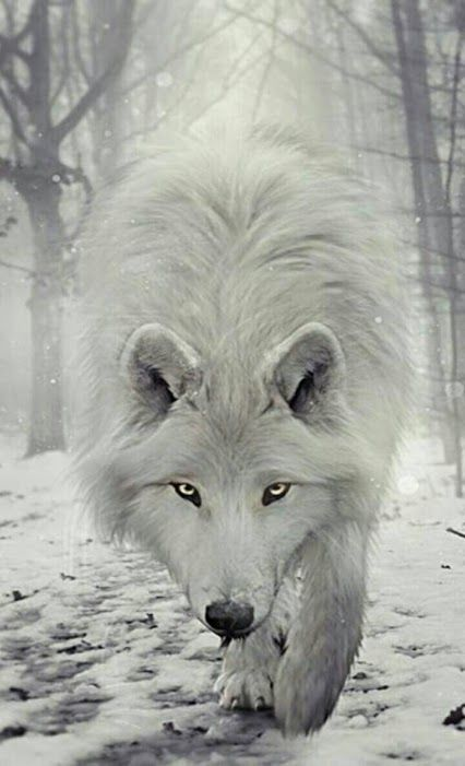 Wolf                                                                                                                                                                                 Más