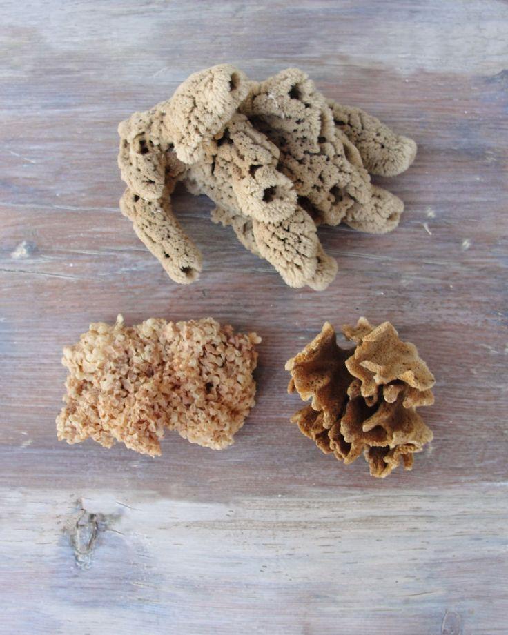Beach Home Decor Natural Sea sponge Sea weed by StarHomeStudio