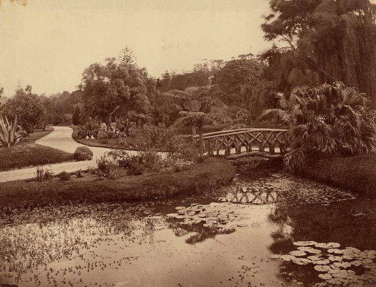[Pond and bridge, Botanic Gardens, Sydney / attributed to the photographer William Vosper], ca. 1880s. SPF / 233 http://acmssearch.sl.nsw.gov.au/search/itemDetailPaged.cgi?itemID=412521