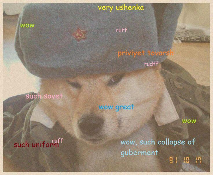 122 best doge images on pinterest doge meme ha ha and doge soviet shibe solutioingenieria Choice Image