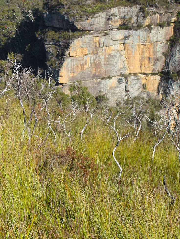 dry sticks and cliff face, Bald Hill