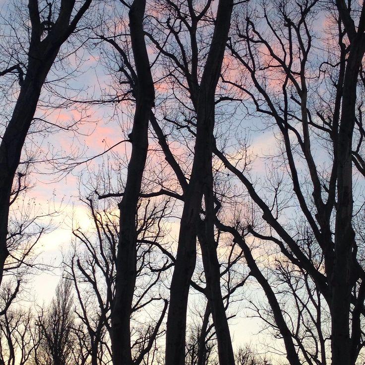 #berlin #alttreptow #treptow #treptowerpark #sunset #tree #trees #black #blue #pink