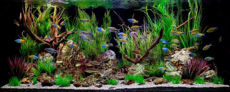 Cool freshwater tank aquariums and beautiful fish for Coolest freshwater fish