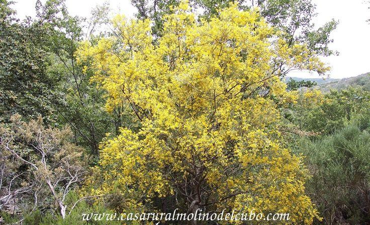 www.casaruralmolinodelcubo.com.