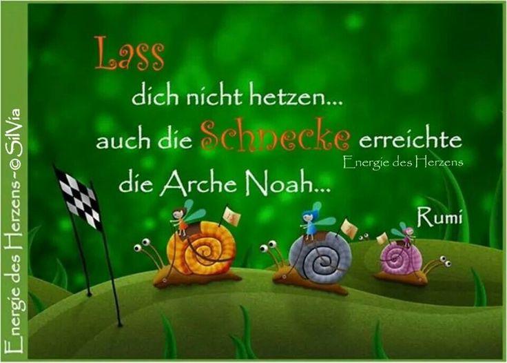 Lass dich nicht hetzen... auch die Schnecke erreichte die Arche Noah... -Rumi