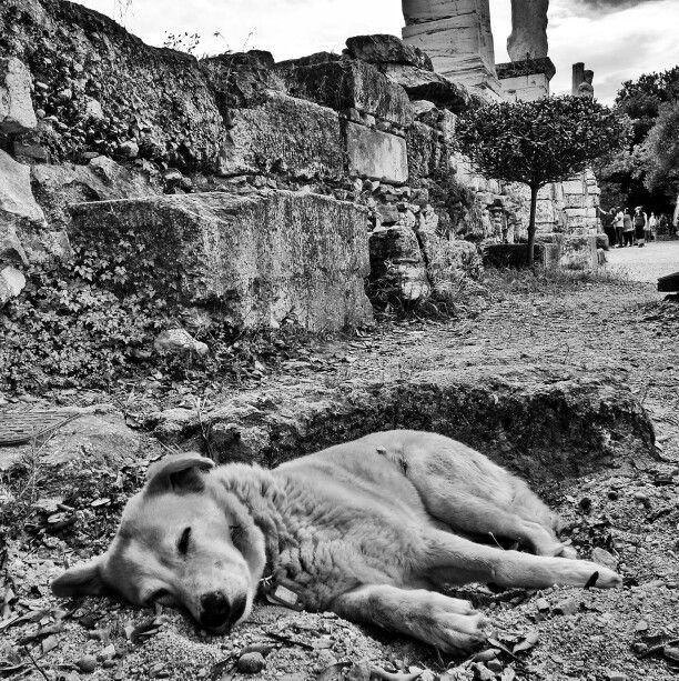 Guardian dog. Athens Agora.
