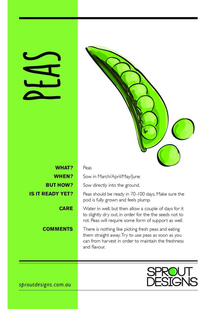How to grow Peas!