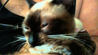 Anastasia Fox - YouTube