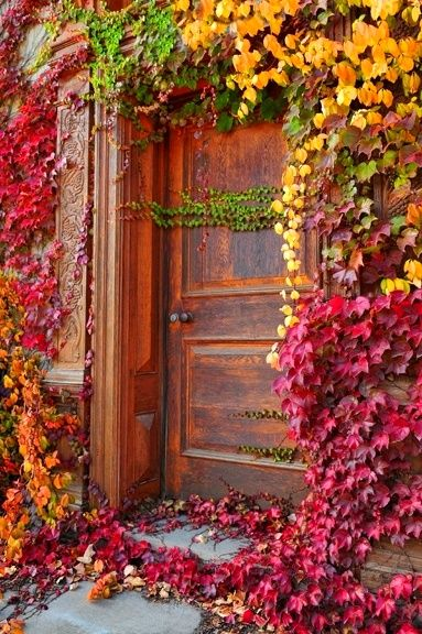 Door surrounded by colourful leaves.