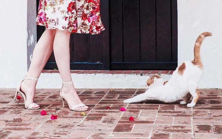 Friday chilling in ZURBANO Lily sandals 💕💕 #Zurbano #ZurbanoShoes #sandals #highheels #powderpink #nudesandals #handmade #italianleather #love #shoelover #heelsaddict #lookoftheday #spring #summer #mystyle #zurbanostyle #cat #vacation #holiday #dominicanrepublic #santodomingo #streets #citystreets #citystyle #polishwoman #photoshoot #editorial #highfashion #model