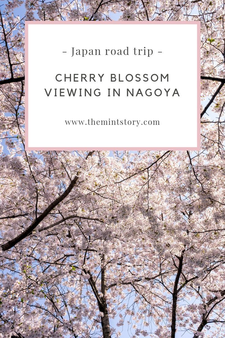 Japan Road Trip Cherry Blossom Viewing In Nagoya The Mint Story Japan Travel Asia Travel Top Places To Travel