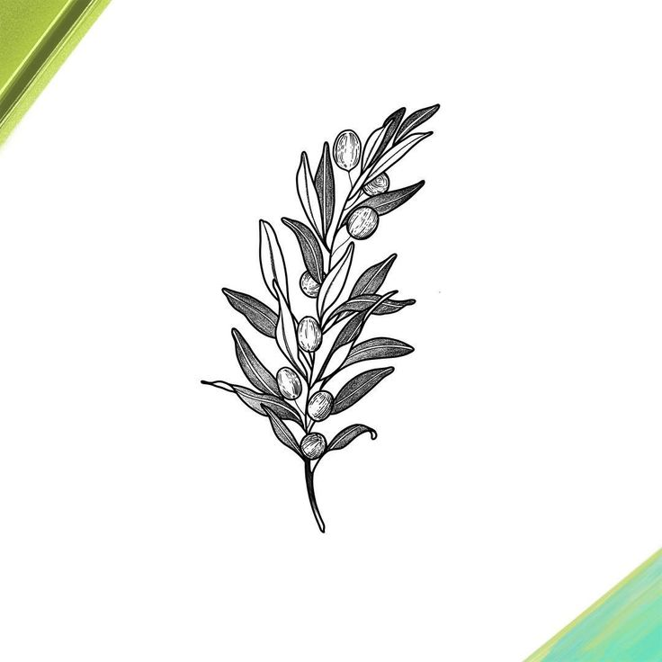 Best 25 Olive Branch Tattoo Ideas On Pinterest Olive