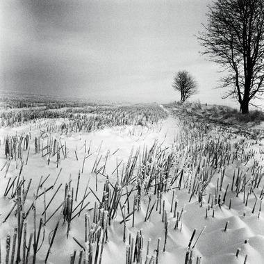 Vinter af Ida Schmidt