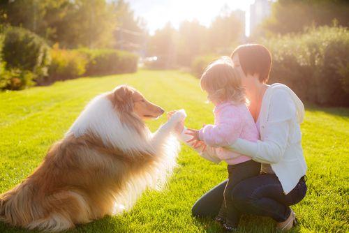 psicologia canina 2