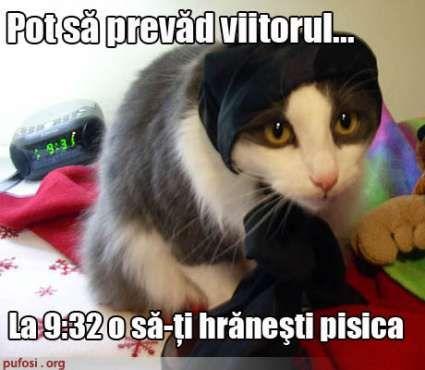 Poze amuzante poza amuzanta pisica ghiceste in stele viitorul