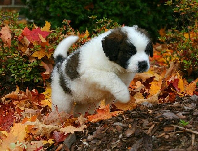 I want my fall puppy