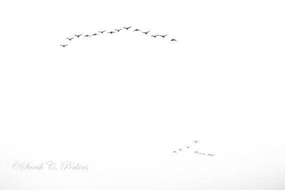 B&W Minimalist Bird Photography Fine Art by SCPerkinsPhotography, $40.00