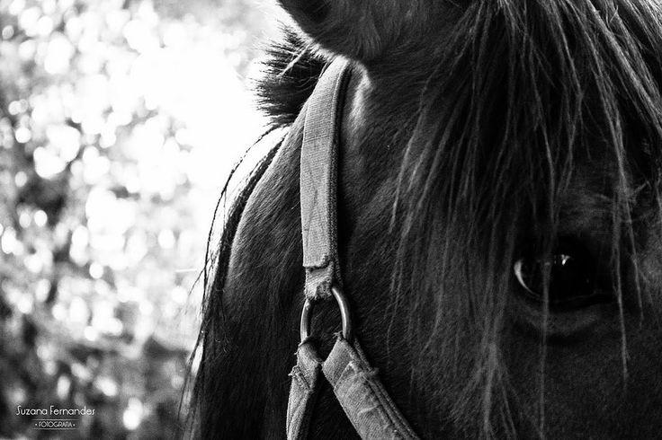 'Quando se foi meu cavalo se sumindo no sem fim Ficou um relincho timbrado por entre o céu e o capim Minha alma comeu mio-mio pastando dentro de mim . Ficou o coxo vazio e a estrevaria tapera Minha vida é sempre inverno, nunca mais foi primavera O Rio Grande não é o mesmo e eu não sou mais o que eu era. Coisa triste meu parceiro sinto o laço neste pealo E pra embretar o silencio que me sobrou de regalo Inté acordado eu escuto o relincho do meu cavalo ' Trecho de 'Um canto pra…