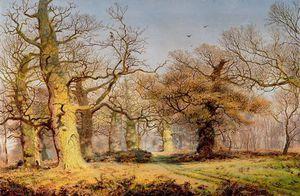 chênes de la forêt de Sherwood - (Andrew Maccallum)
