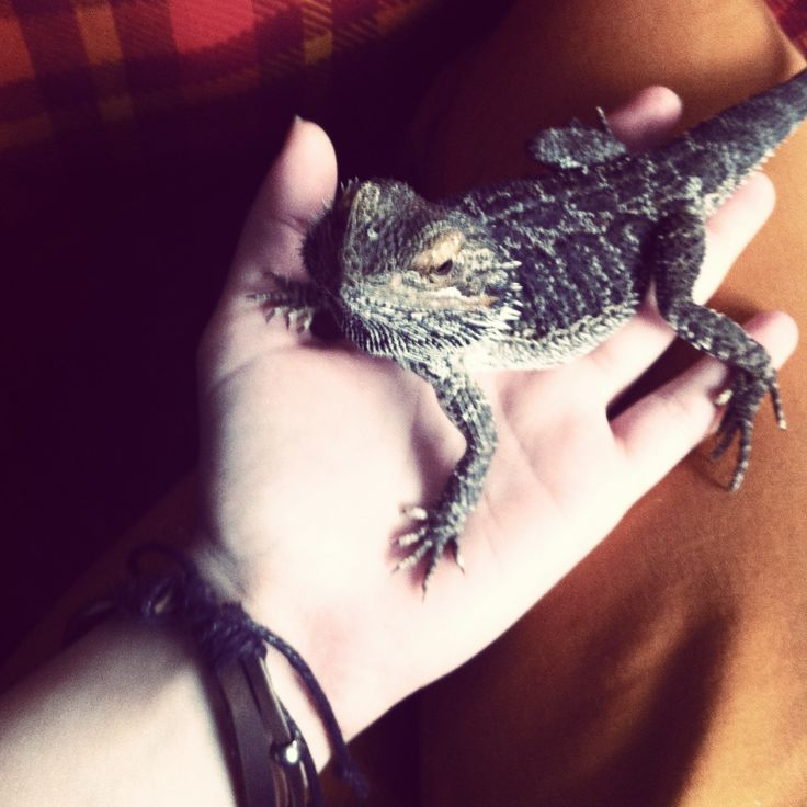 "My boyfriends little dragon ""Fee"""