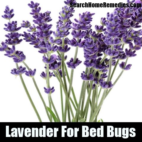 23 best images about bug killers on pinterest mosquitoes