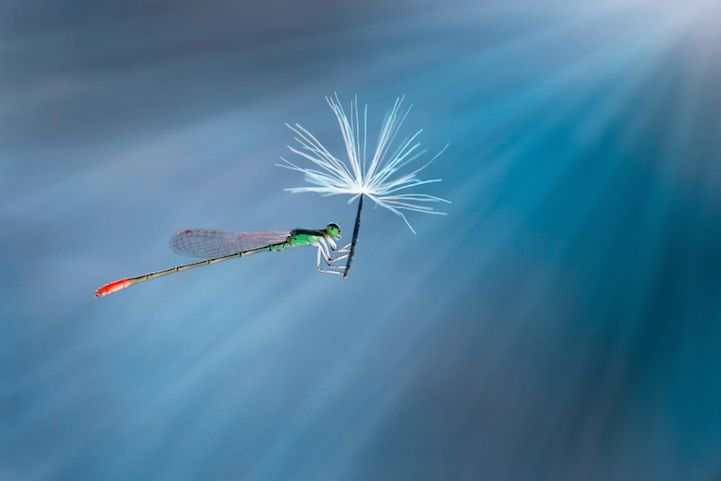 Exquisite Macro Photos Reveal the Miniature World of Insects - My Modern Met