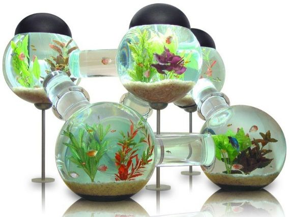 If a fish tank and a hamster habitrail had a baby...    This is super cool~