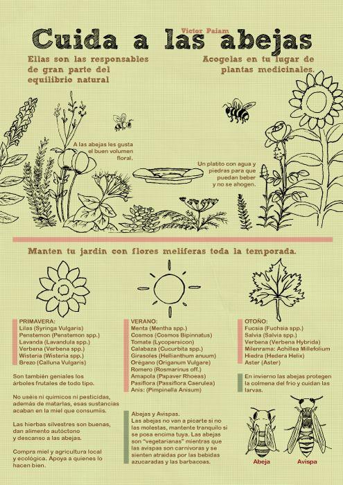 Infografía+-+Cuida+de+las+abejas                              …